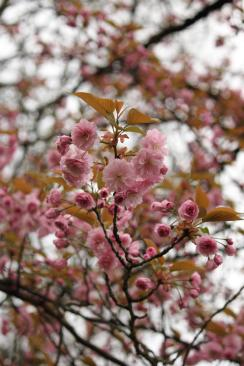 plum branch IMG_5832_