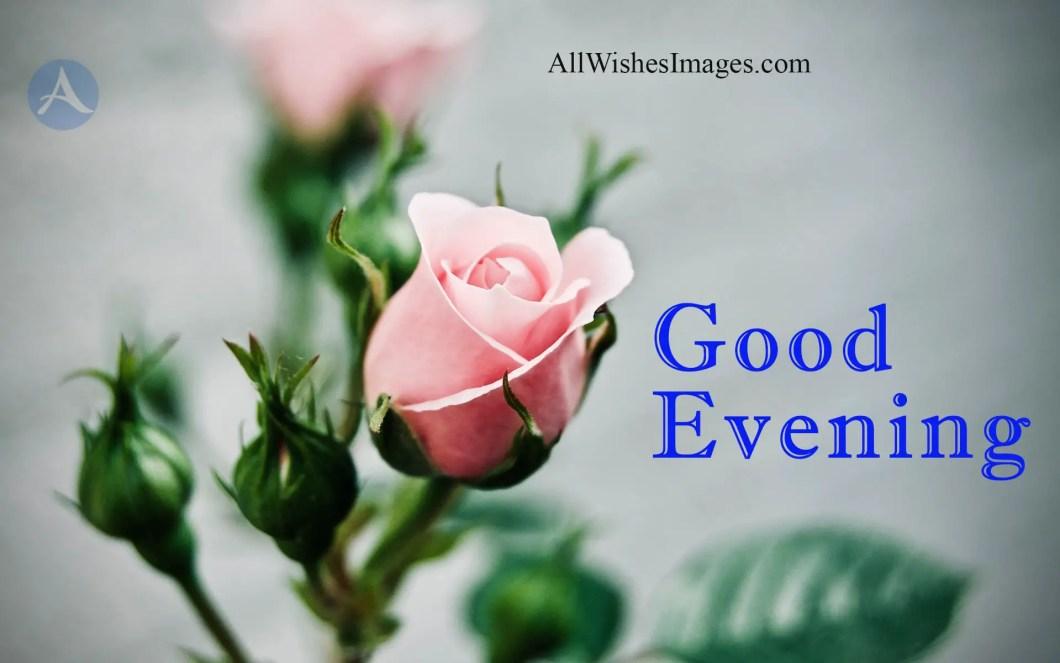 Good Evening Flowers Photos Kayaflowerco