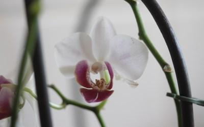 Orquídeas: colores y formas diferentes para todos los gustos