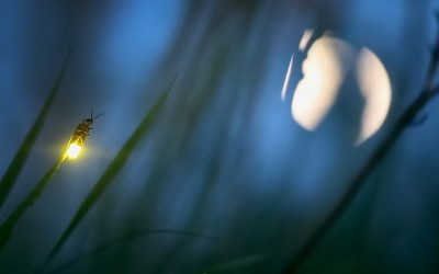 How do insects communicate?