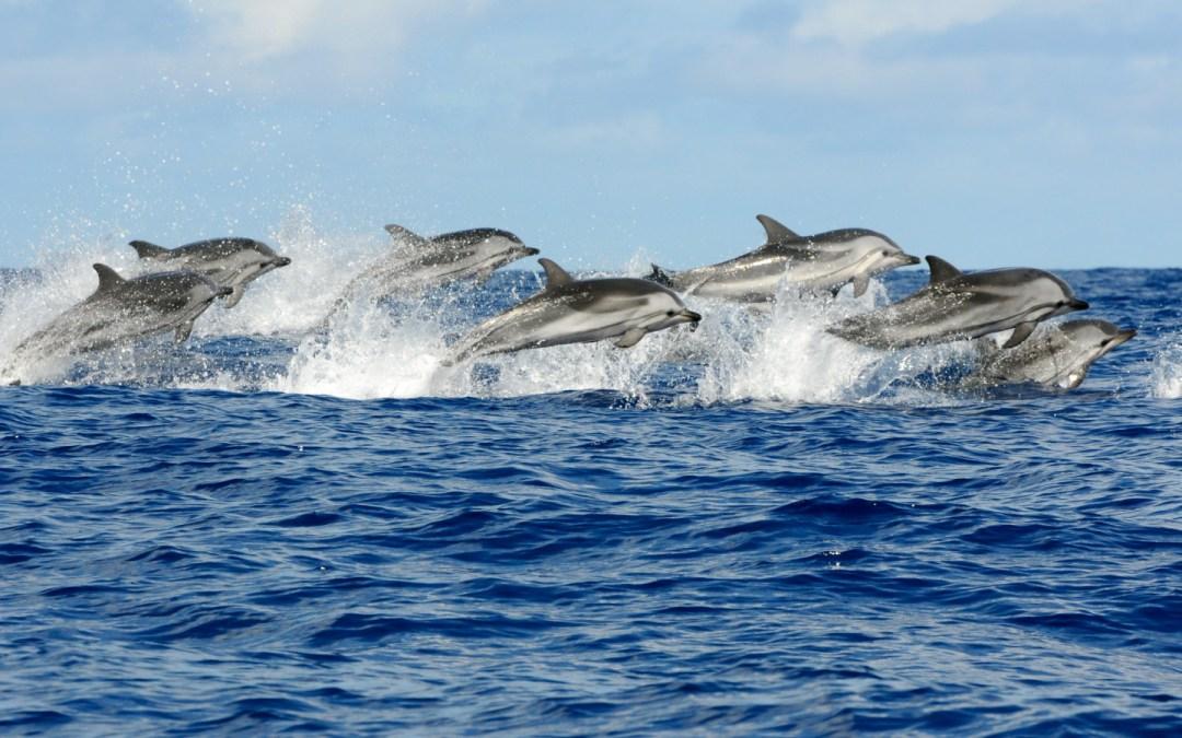 Cetacis del mar Mediterrani