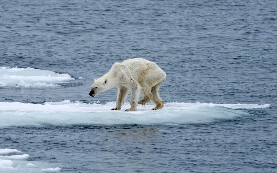 El Ártico: ¿a quién le importa?