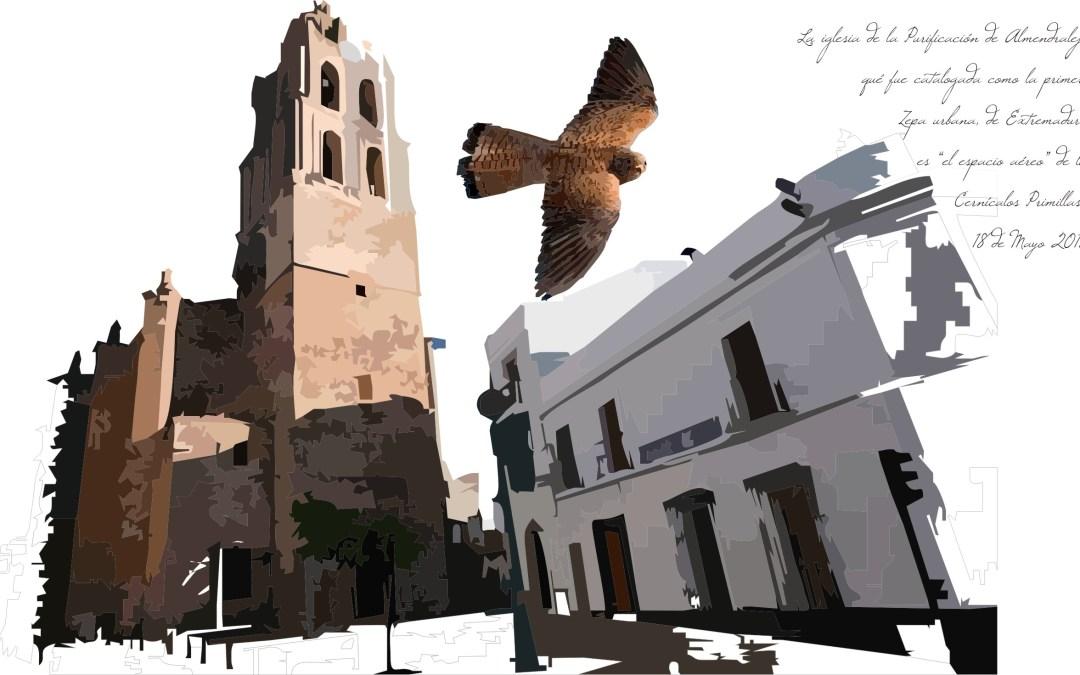 Lesser kestrel: our urban falcon, our treasure