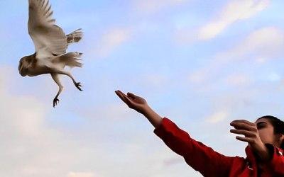 Tornar a volar: musculació d'aus en rehabilitació