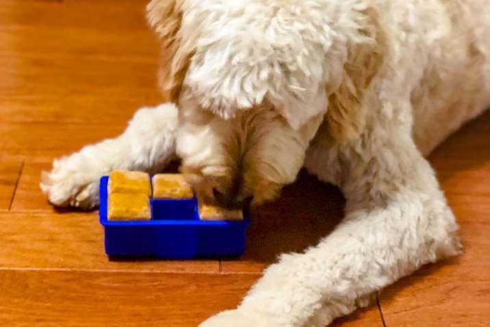 Two Ingredient Pumpkin Almond Butter Dog Treats