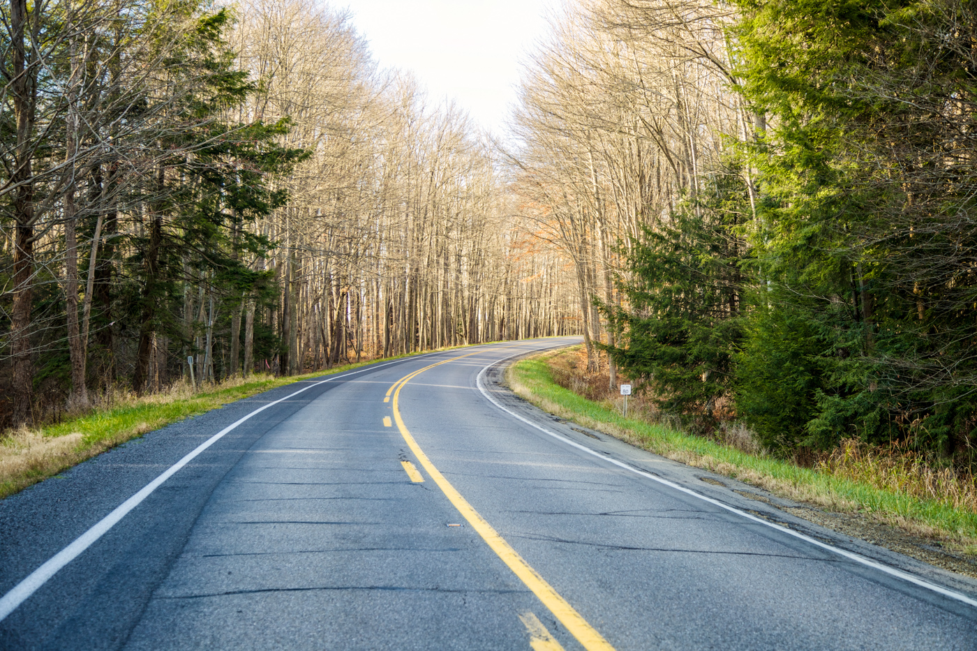 Road through Allegheny National Forest