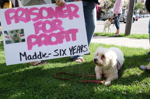 Animal welfare protest sign