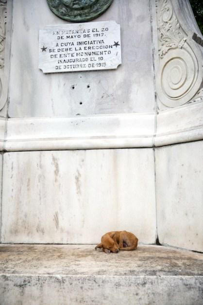 Stray puppy in Matanzas