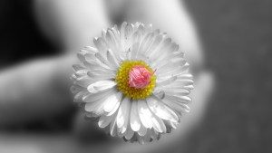 give_a_flower_1600x900
