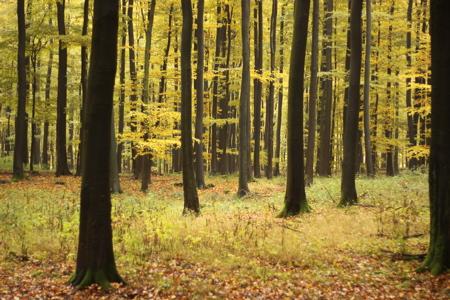 Wachsen nicht in den Himmel: schwarz-gelbe Bäume !