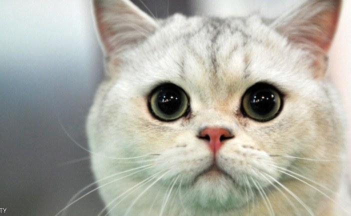 """قط """"يحتجز"""" أسرة أميركية في بيتها لساعات"""