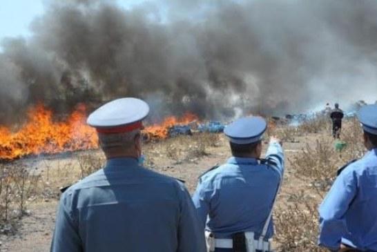 """الدولة تتجه إلى القضاء على """"الكيف"""" نهائيا والعفو عن الهاربين"""