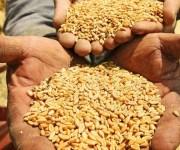 الزراعة: تشكيل لجان تضم فنيين من الطاقة الذرية لفحص شحنات القمح من روسيا