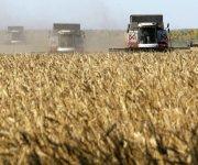بيان من وزارة الزراعة حول سلامة واردات القمح الروسي بعد «الانفجار النووي»