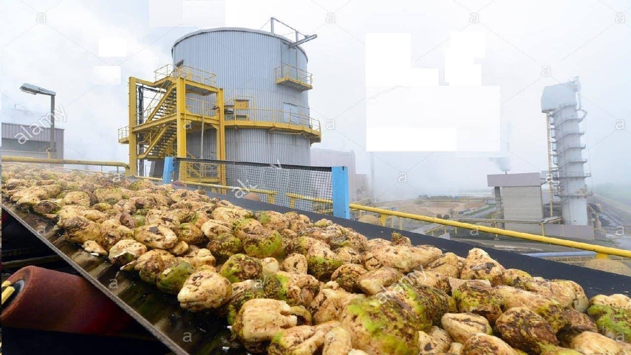 وزارة التموين تشتري 80 ألف طن سكر من شركات «البنجر» - جريدة المال