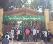 4 آلاف زائر لحديقة حيوان الإسكندرية أول أيام عيد الأضحى