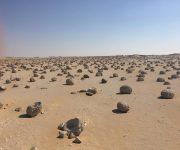 تعرف على مشروع تعزيز المواءمة في البيئات الصحراوية بمطروح