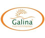 «جالينا» تعتزم ضخ استثمارات بقيمة 80 مليون جنيه لتدشين مصنع جديد