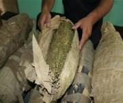 مخبأة بحمولة جبس.. «تأمين قناة السويس» يمنع تهريب 2 طن بانجو (صور)