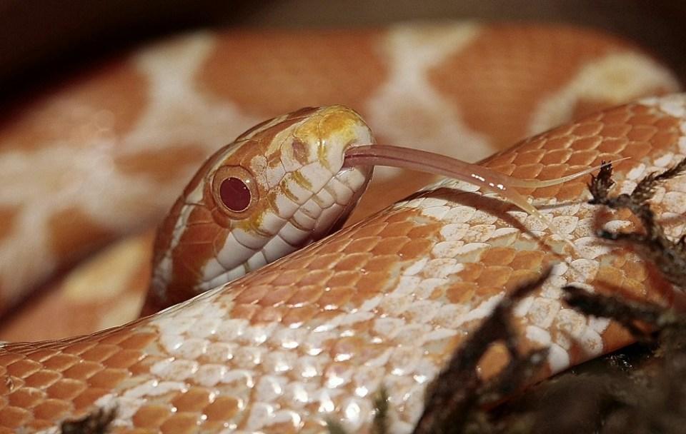 Cuidar a una serpiente