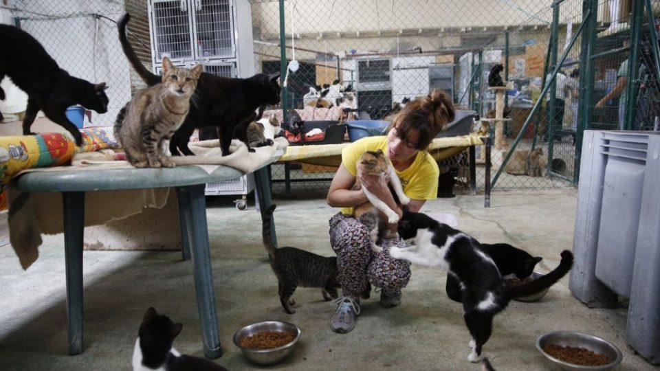 Protectora de animales con gatos