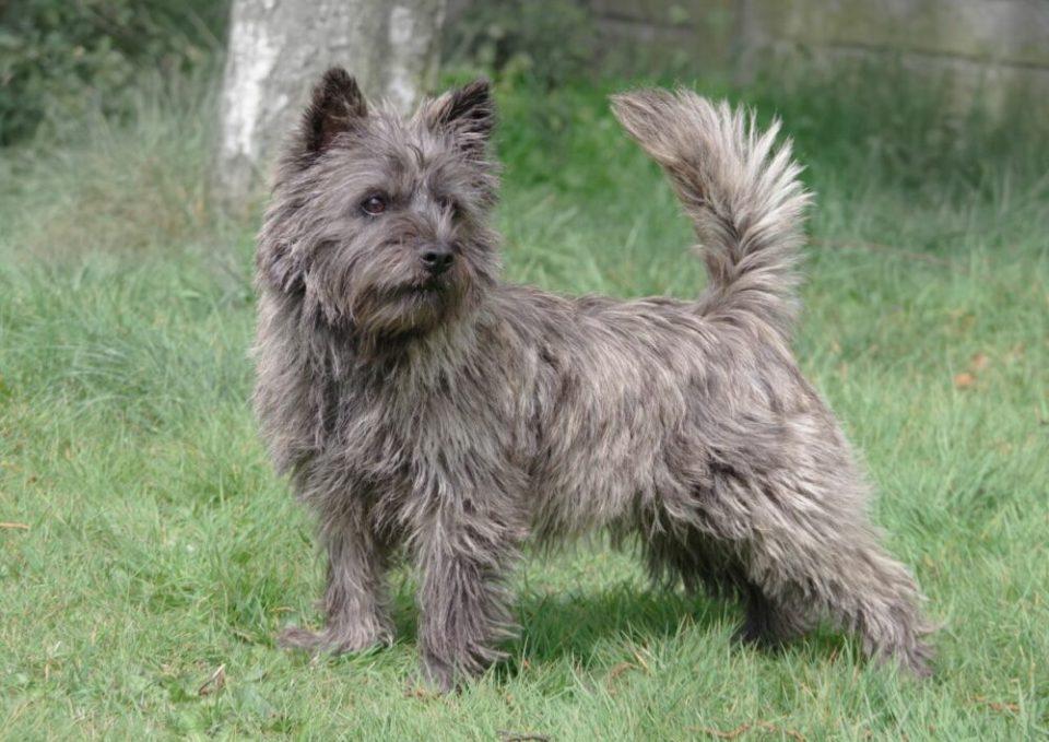 razas de perros pequeños más bonitos del mundo