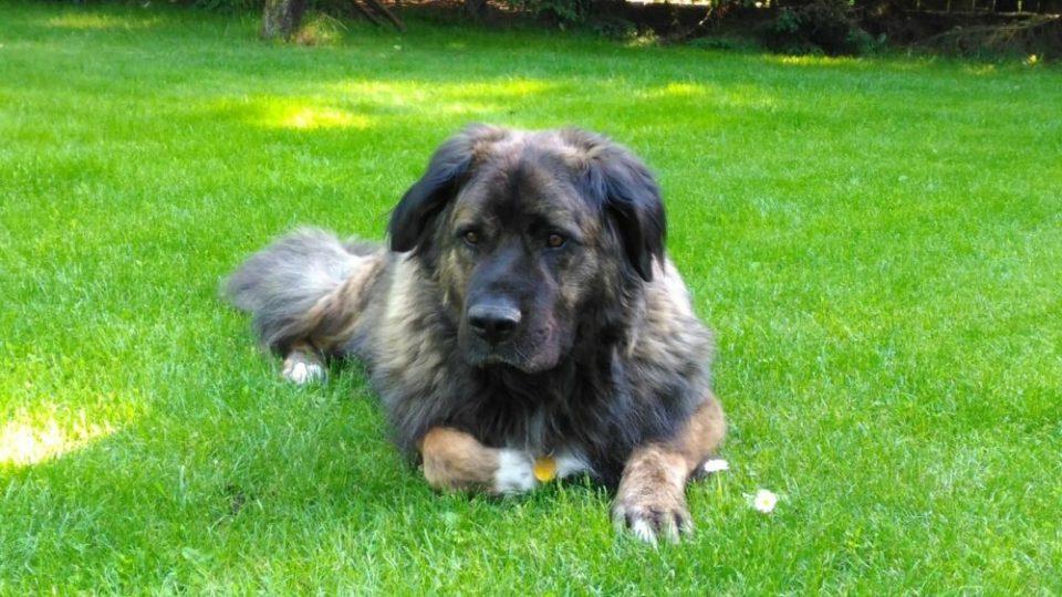 cuales son las razas de perros grandes más bonitas del mundo