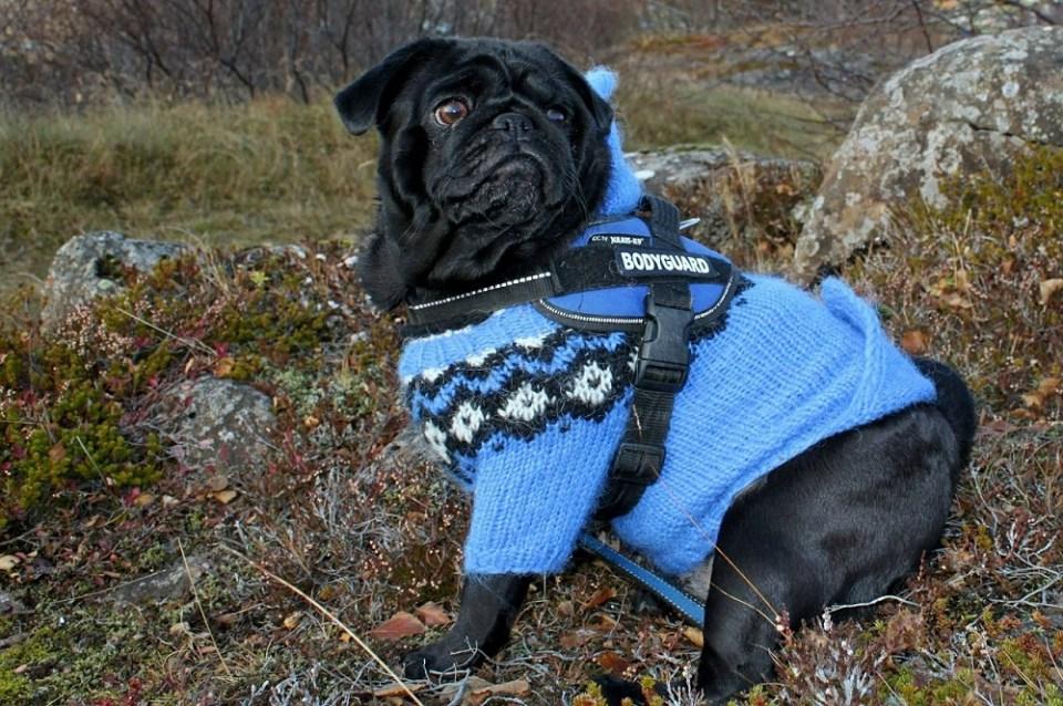 Razas que necesitan abrigo en invierno