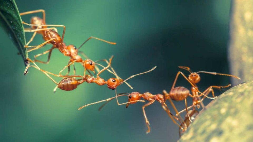 Las hormigas son inteligentes