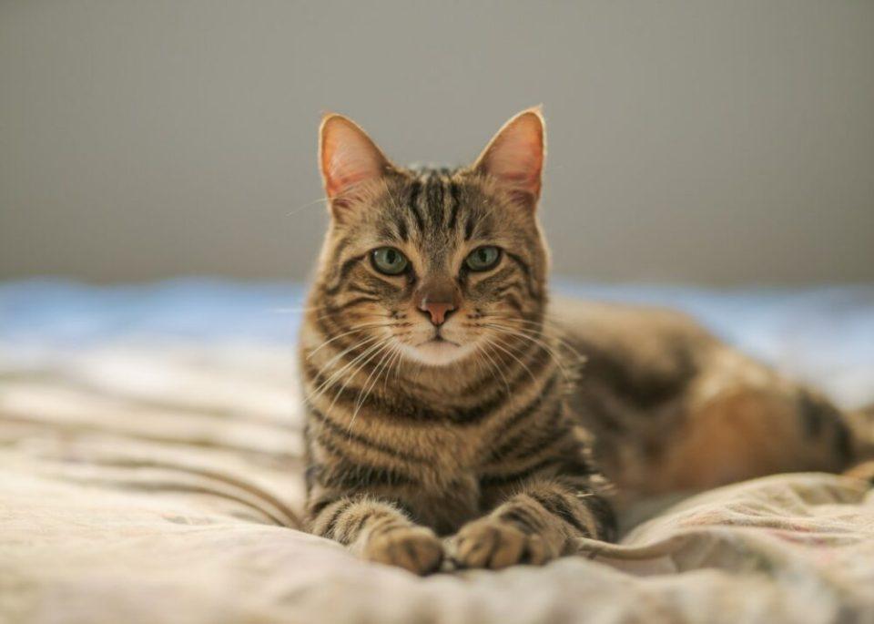 Consejos y trucos para educar a un gato fácilmente