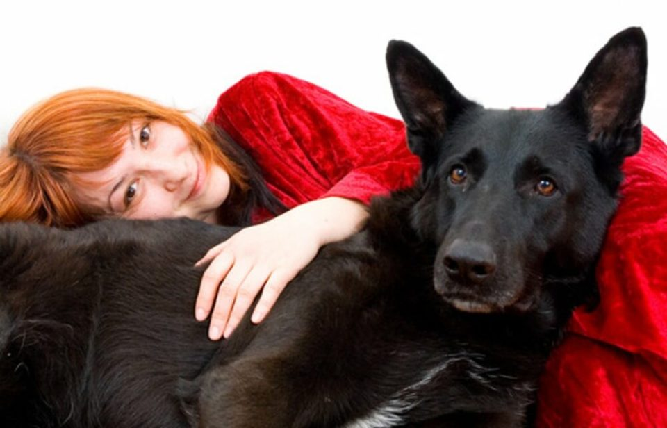 Animales de confort o apoyo emocional