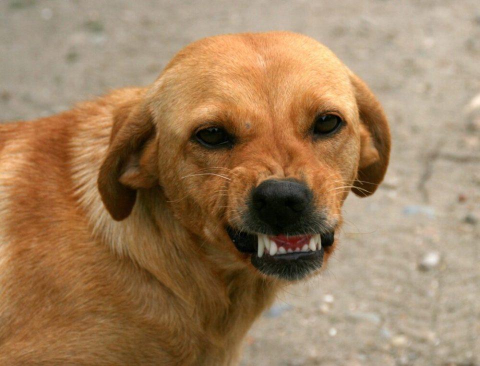 Si enseñan los dientes después de agarrarles el hocico es su forma de decir que le haces daño