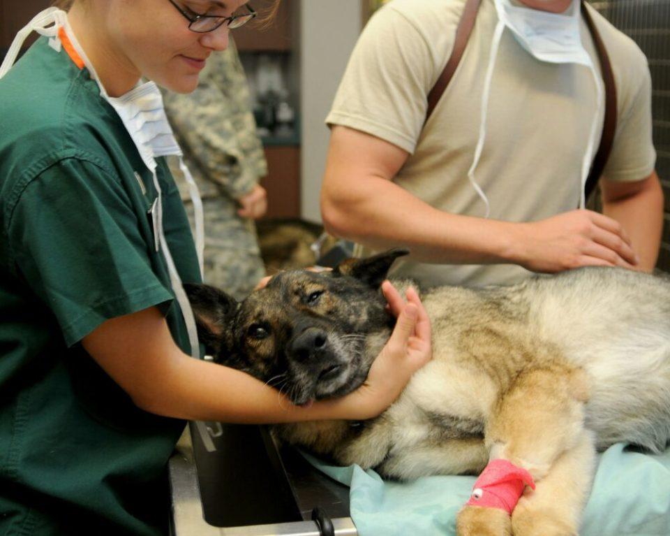 Cuánto dinero cuesta mantener un perro - gastos de veterinario