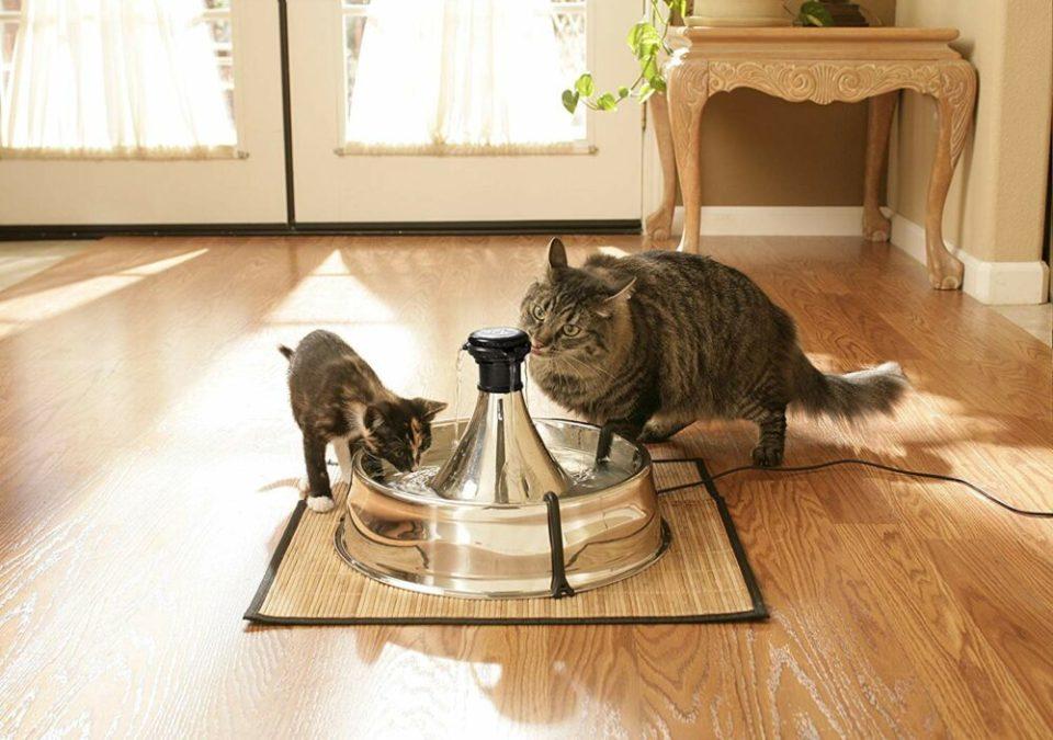 Mejores fuentes de agua para gatos de acero inoxidable