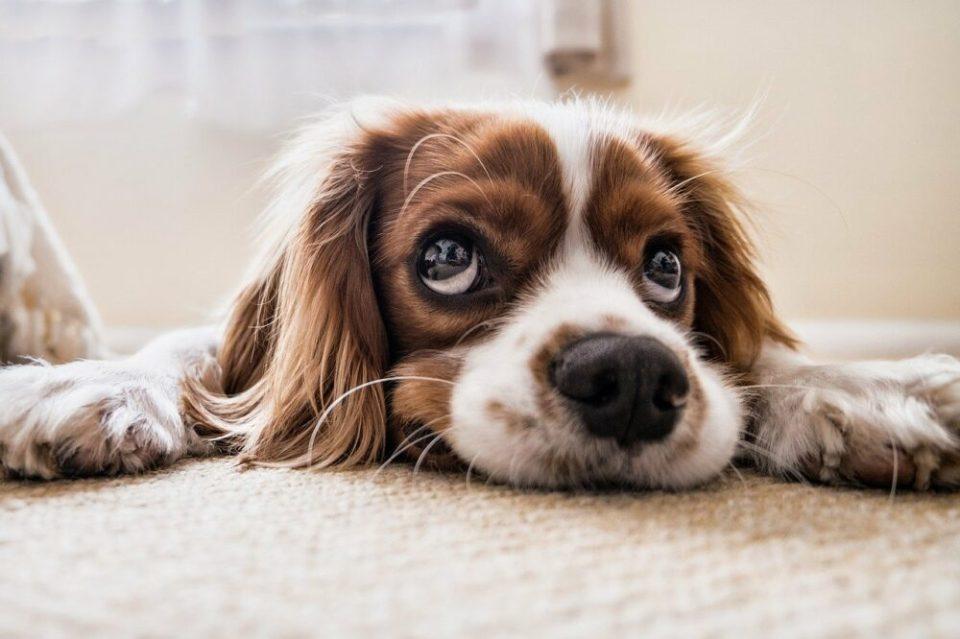 regañar a tu perro correctamente