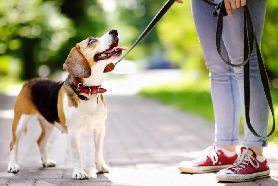 ventajas y desventajas de tener un perro