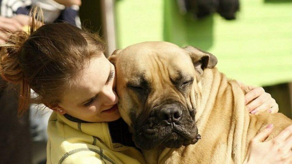 Beneficios tener perro viviendo solo