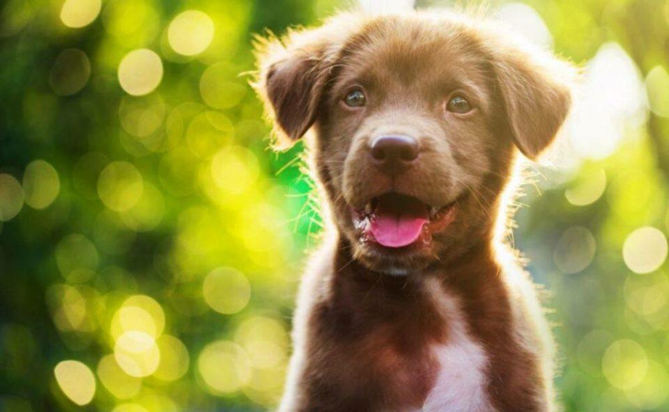 dientes de leche en los cachorros de perro