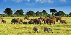 أهم المحميات الطبيعية في كينيا
