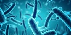 اضرار البكتيريا للانسان
