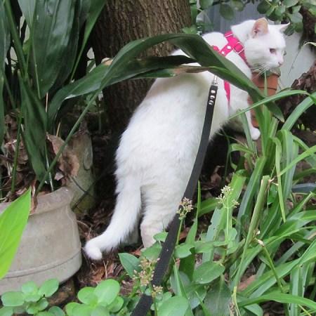 Arnes en H para gatos