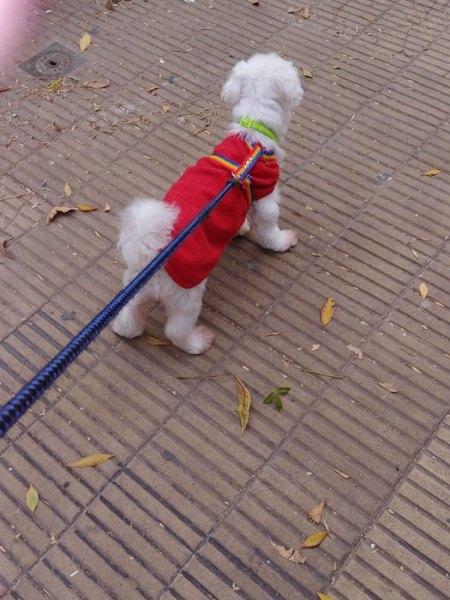 Arnes en H para perro Pretal Antiescape