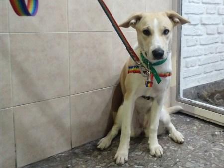 Pretal Antitirones Perro correa seguridad link