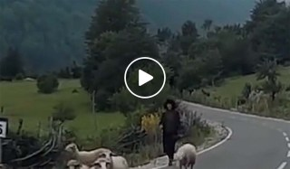 خروف ينتقم من الراعي