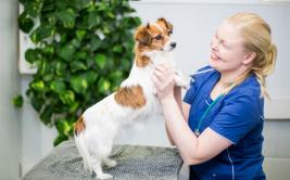 Koiran terveystarkastus