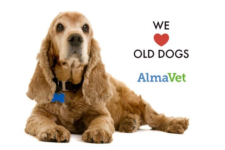 Vanhan koiran terveystarkastus