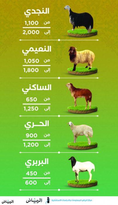 اسعار الاضاحى هذا العام 2022 الرياض
