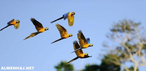 تمر الطيور بمنقارها على طول الريشة لماذا ؟
