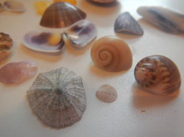 Shells, small and large