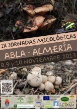 micoabla 2013